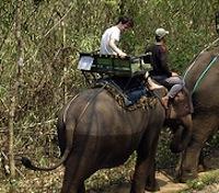 Elephant ride, Chiang Mai, Thailand